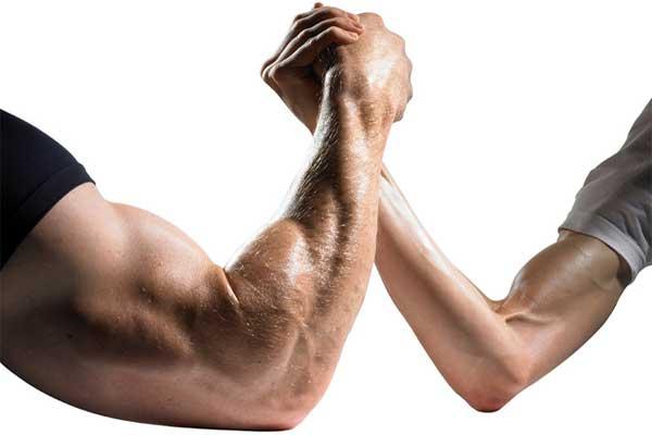 нарастить мышечную массу